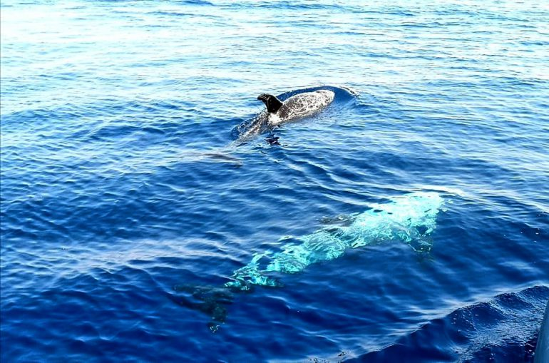 Puglia rincorrendo i delfini nel mar jonio ♡ iviaggidiliz